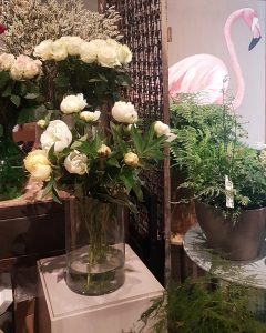 ARCHEGONIA FLOWERS